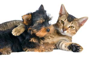 Dog and Cat Veterinary Care